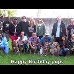Cães adoptados
