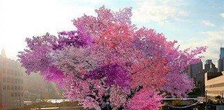 Árvore híbrida