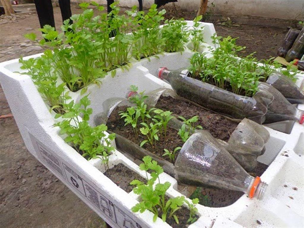 Como cultivar uma horta org nica em casa - Cultivar plantas aromaticas en casa ...