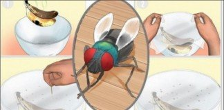 Livrar-te das moscas