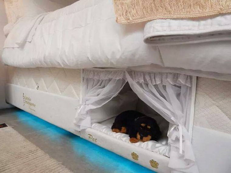 camas-especiais-para-dormir-ao-lado-do-teu-animal-de-estimacao