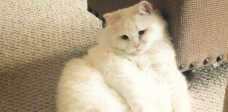O gato mais fofo