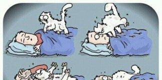 Dormir com animais