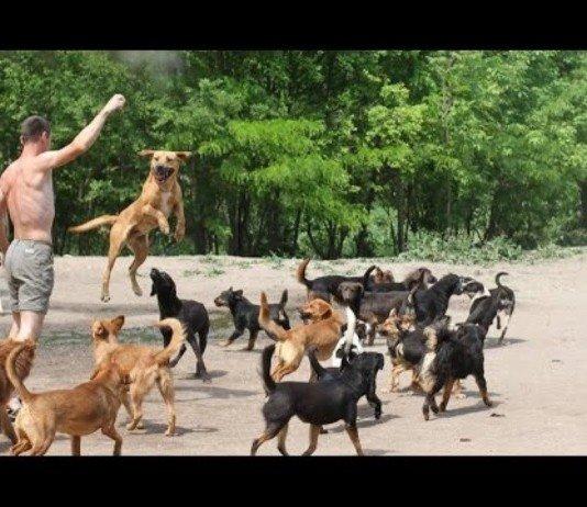 450 cães