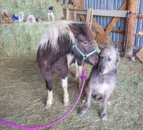 Cuidar de animais