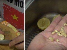 Sementes de limão