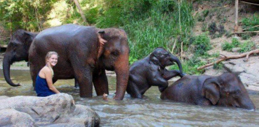 Salva elefantes