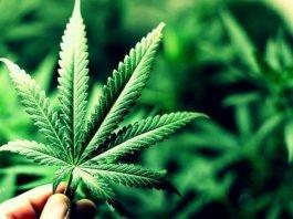 Fuma cannabis