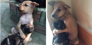 Animais abraçam-se um ao outro