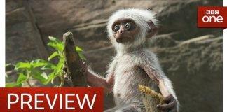 Mãe macaco
