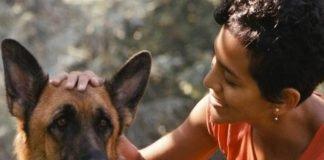 Cães entendem humanos