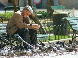 Dar de comer aos pombos