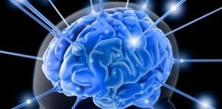 Neurocientistas e cérebro