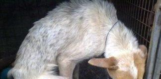 Cadela enterrada viva
