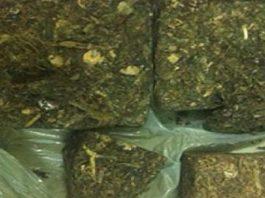 Trafico de cannabis