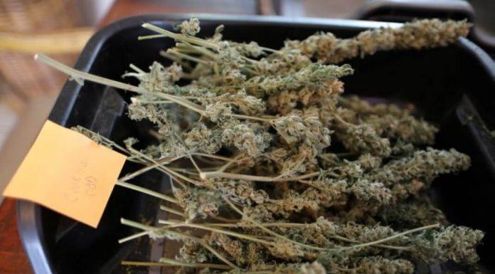 Houston cannabis dating