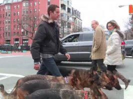6 cães na rua