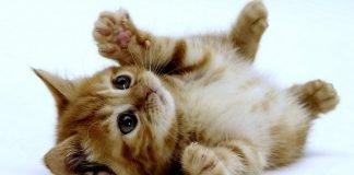 O que nunca deves fazer a um gato
