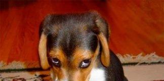 Cuidado ao repreenderes o teu cão