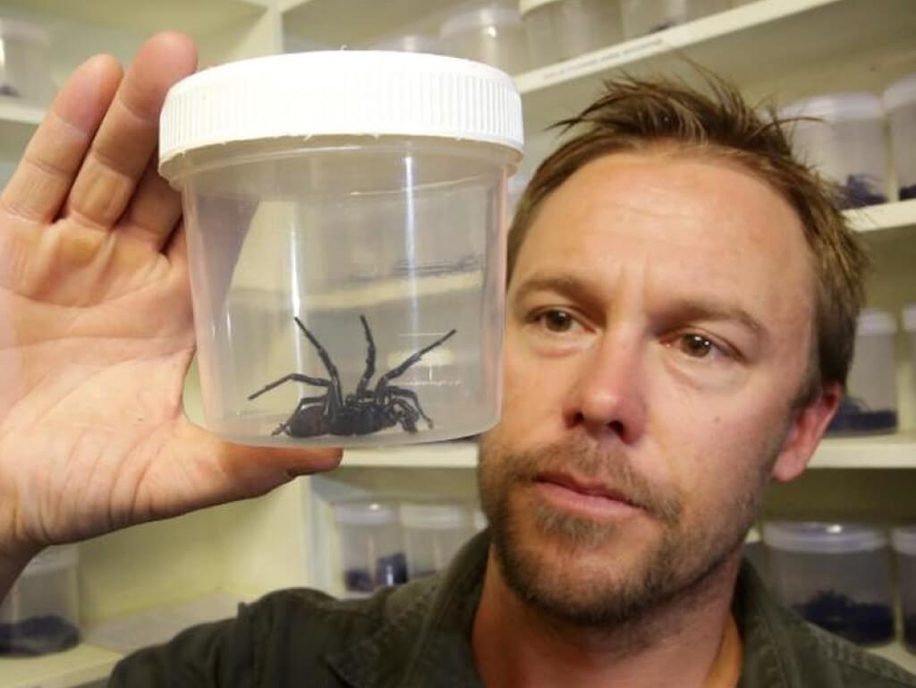 Aranhas mordem criança