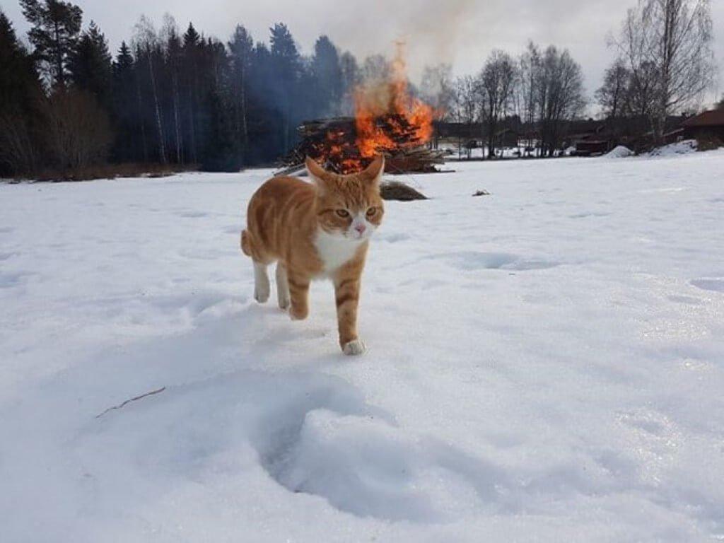 Gatos e o pacto com o diabo