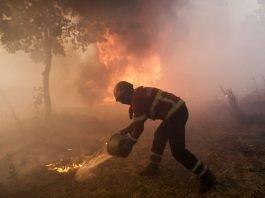 Atear fogo nas florestas