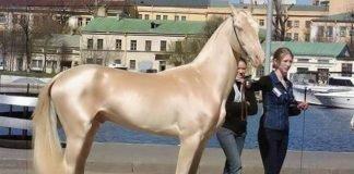 cavalo mais bonito do mundo