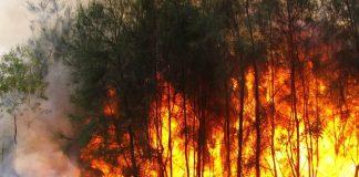 Incêndios em Portugal