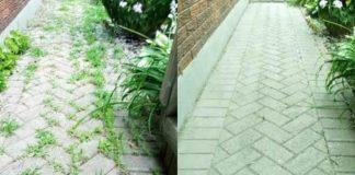Como acabar com as ervas daninhas