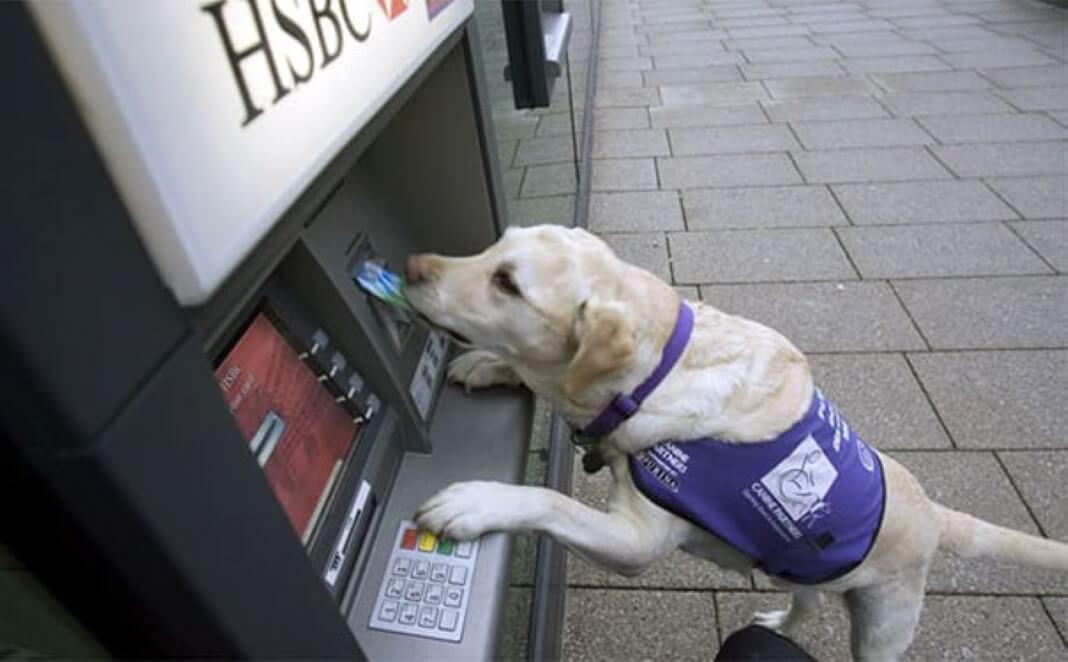 assalto nas caixas multibanco