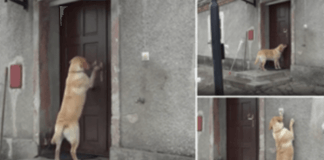 Cadela inteligente