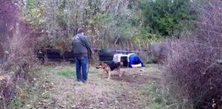 Cão acorrentado