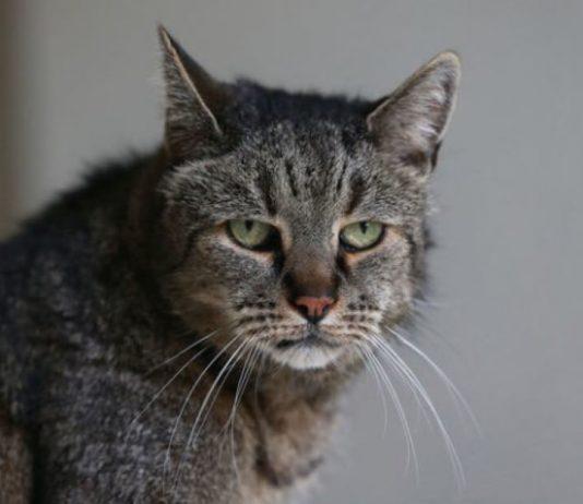 O gato mais velho do planeta