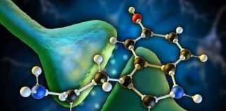 hormona do sono - melatonina