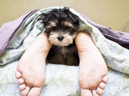 Melhorar o sono do animal