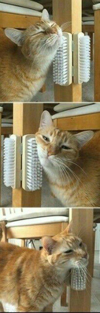 Gato morto de tédio