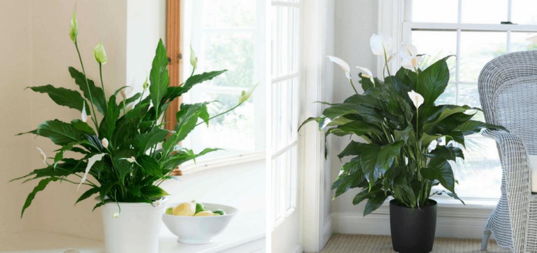 É possível ter plantas em casa sem as matar