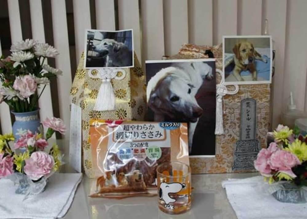 asilo para cães idosos