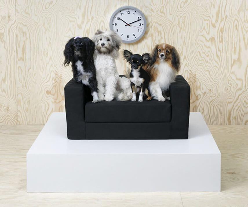 colecção para cães e gatos