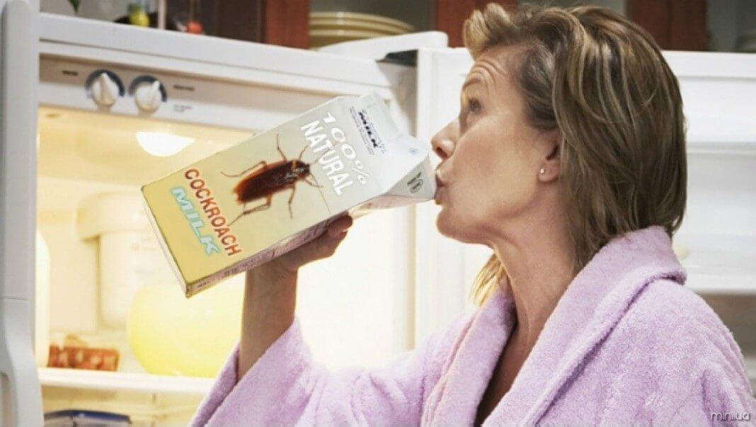 Resultado de imagem para leite e barata