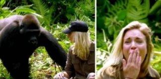 Homem cuida de gorilas