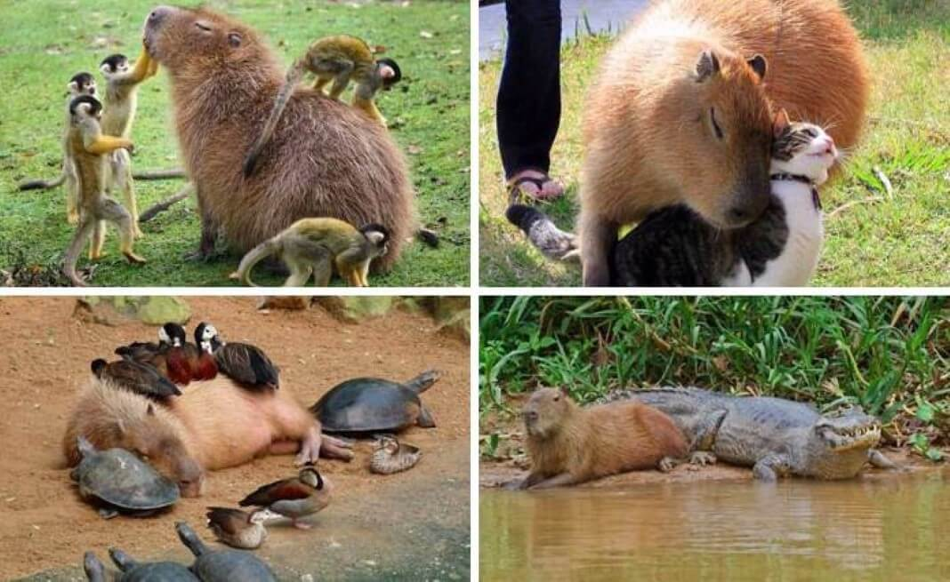 animais mais felizes