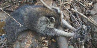 Crueldade sofrida pelos animais