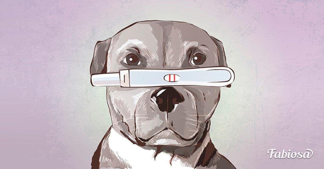 os cães podem prever