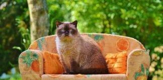 calcular a idade de um gato
