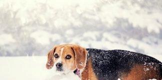 proteger o teu cão