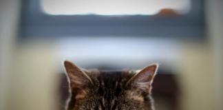gatos são extremamente vingativos