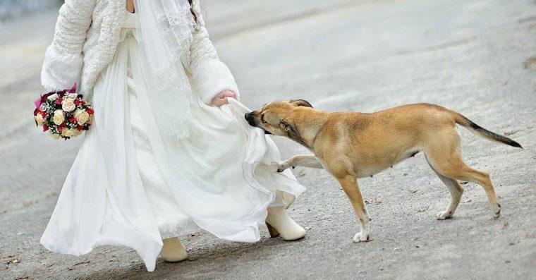 vestido de uma noiva