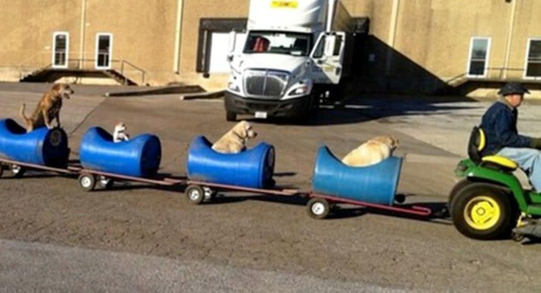 carro para cães passearem