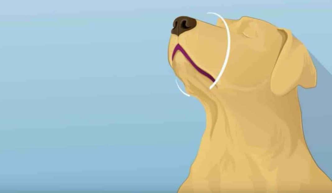 vida do teu cão